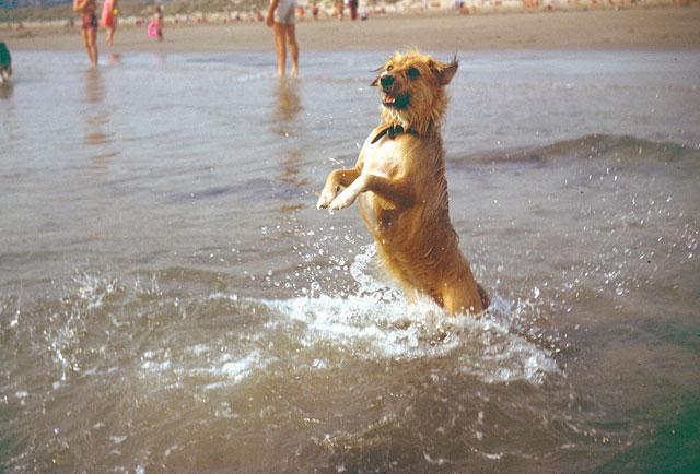 Tramp. Much adored dog. Enjoying herself in summer, '75.